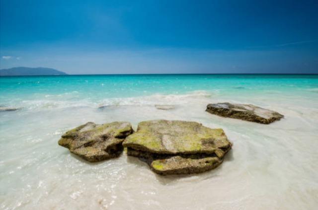 ソコトラ島-珊瑚